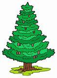 Cartoon coniferous tree