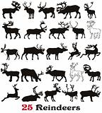 25  reindeer