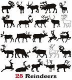 25  reindeer