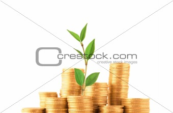 Green plant grow up in golden coins isolated on white