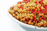 Red and white currants.