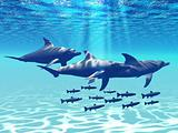DOLPHIN PLAY