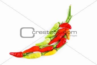 aligned colorful chili isolated on white background