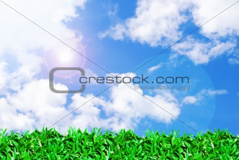 green grass field and beautiful sky