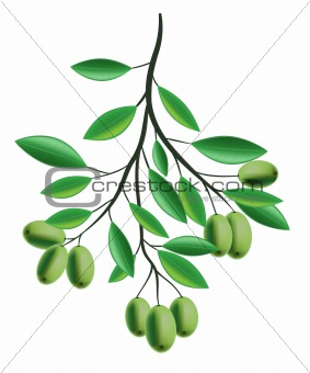 Olive Branch illustration