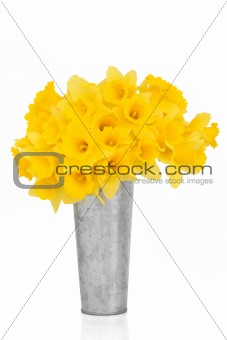 Daffodil Flower Beauty