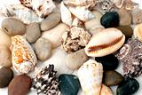 Cockleshells and  pebbles