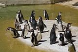 Penguin's activity in zoo