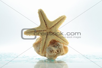 Starfish &amp; shell rock