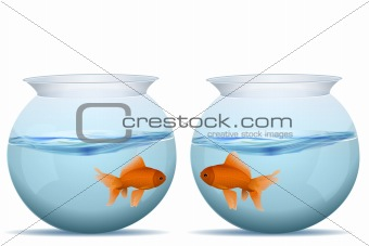 fishes in tanks
