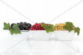 Black, Red and White Currant Fruit