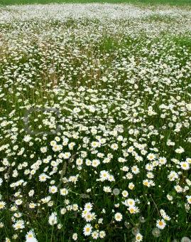 Blooming meadow.