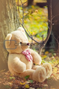 A light brown teddy bear