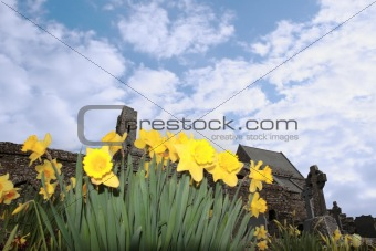 daffodils in front of ancient celtic crosses