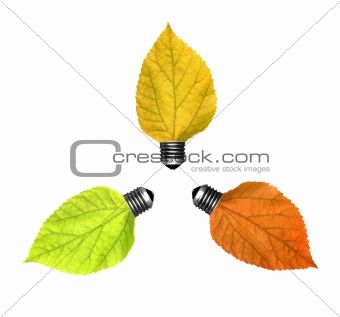 Three bulbs