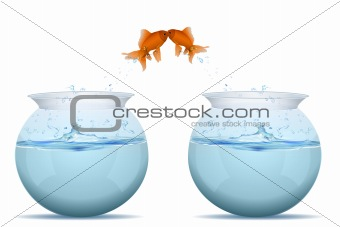 fishes jumping from tank