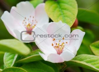 Pair of spring flowers