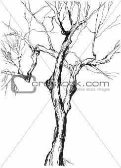 old tree drawing  graphic  sketch
