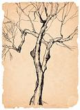 old tree shabby paper pen drawing