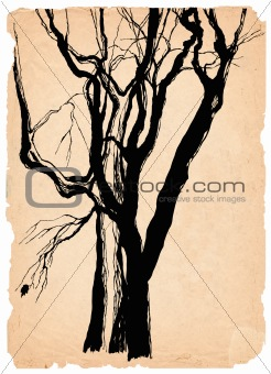 old trees shabby paper pen drawing