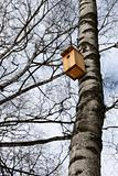 Birdhouse on the trunk of a birch