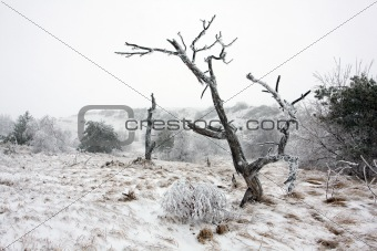 Old trees on winter field