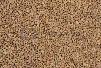 Background of pistachio