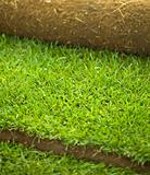 Turf grass roll closeup