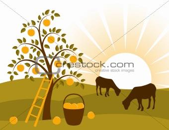 apple tree and grazing goats