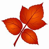 Leaf of raspberry, vector
