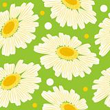 Seamless floral pattern with white daisy