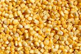Corn bean