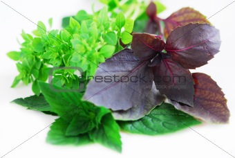 Assorted basil herbs