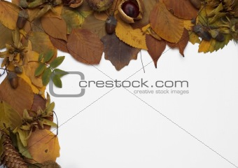 Autumn leaves and fruits frame