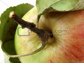 apple fragment