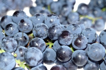Close-up grape