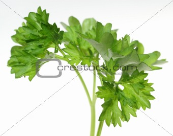Top of parsley