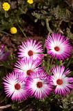 Bunch of pink wild flowers