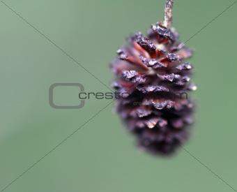 Small Pine Cone