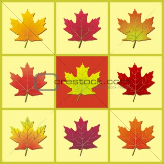 3x3 Maple Leaf