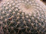 Close up shot of round cactus covered with sharp spines