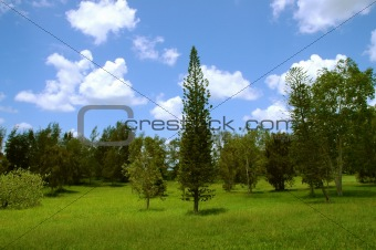 Green summer trees