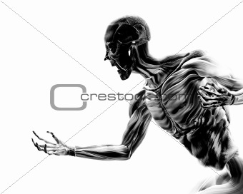 Muscles On Human Body 17