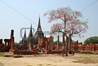 Ancient Thai temple ruins in Ayuthaya with tree