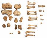 skeleton skull bones