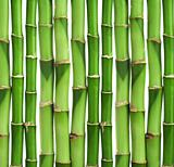 bamboo background isolated