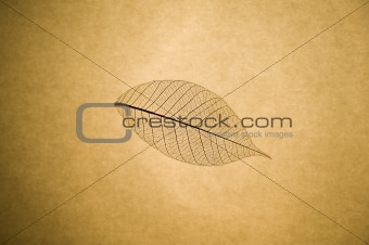 Skeleton leaf macro detail close up on grunge papaer background