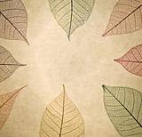 Skeleton leaf macro detail close up on grunge papaer background