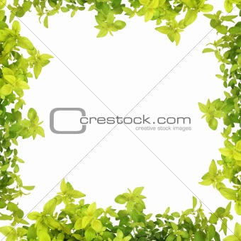 Herb Leaf Abstract Border