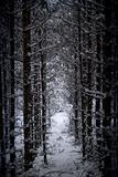 Tree trunks in vinter